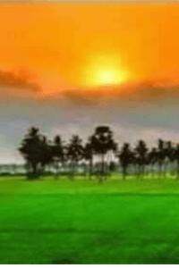 English Satire Poem I Love My India